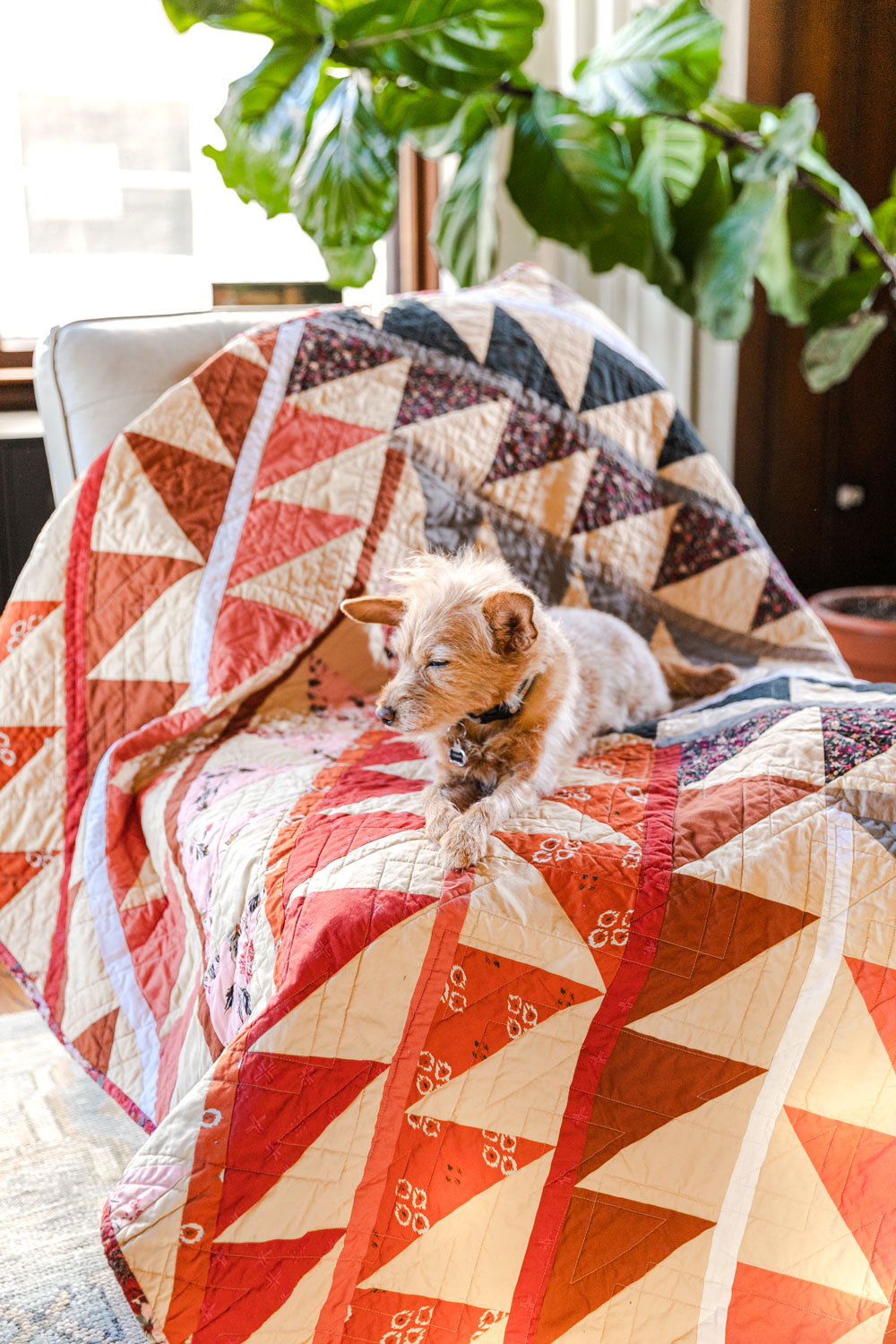 Join a fun sew along! It is easy to participate – all you need is the Gather quilt pattern so we make this quilt together! suzyquilts.com #quiltpattern #quiltdog